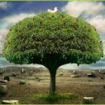 Keutamaan Membaca Al-Qur'an, Surat Al-Baqoroh Dan Ali Imron